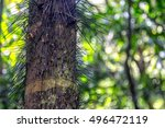 spiky tree trunk in the...   Shutterstock . vector #496472119