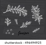 medicinal plants set. hand... | Shutterstock .eps vector #496494925