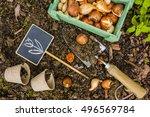 flower bulbs and garden... | Shutterstock . vector #496569784