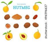 vector set of nuts. nutmeg... | Shutterstock .eps vector #496596637