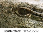 Nile Crocodile  Crocodylus...