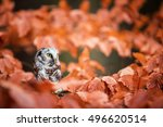owl in the orange forest.... | Shutterstock . vector #496620514