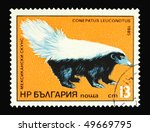 Small photo of BULGARIA - CIRCA 1985: A stamp printed in Bulgaria showing American Hog-nosed skunk circa 1985