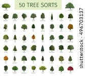 fifty different tree sorts with ... | Shutterstock . vector #496703137