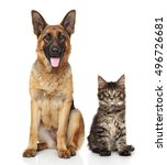 Stock photo cat and dog together in front of white background 496726681