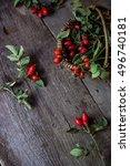 rosehip berries   Shutterstock . vector #496740181
