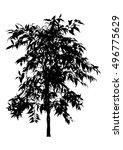 tree  flower benjamin   ficus... | Shutterstock .eps vector #496775629