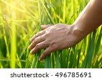 the hands of women farmer... | Shutterstock . vector #496785691