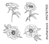 vector set of hand drawn... | Shutterstock .eps vector #496787905