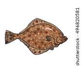 hand drawn flounder  sketch...   Shutterstock .eps vector #496820581