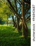 trees in sunlight near pond in... | Shutterstock . vector #496843687