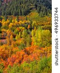 canopy of autumn trees in rocky ... | Shutterstock . vector #496933744