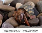 Caribbean Hermit Crab On Wet...