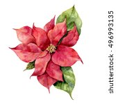 Watercolor Poinsettia. Hand...