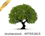 beautiful tree on a white... | Shutterstock .eps vector #497051815