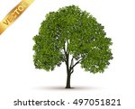 beautiful tree on a white... | Shutterstock .eps vector #497051821