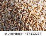 dinkel wheat heap  macro... | Shutterstock . vector #497113237