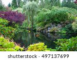 in a small pond  overgrown with ... | Shutterstock . vector #497137699