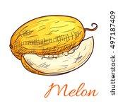 melon fruit vector color sketch ... | Shutterstock .eps vector #497187409