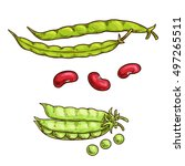 green pea and bean vegetable... | Shutterstock .eps vector #497265511