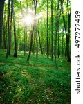 forest trees. nature green wood ... | Shutterstock . vector #497272459