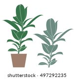 ficus. abstract house plant | Shutterstock .eps vector #497292235