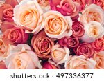 Stock photo background of pink orange and peach roses 497336377