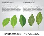 basil leaves on the branch.... | Shutterstock .eps vector #497383327