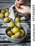 Small photo of Female hands wiping fresh picked miniature pears and putting them into a vintage pewter bowl.
