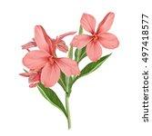 illustration of beautiful... | Shutterstock . vector #497418577