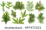 set of evergreen coniferous... | Shutterstock . vector #497471521