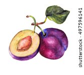 plum drawing watercolor... | Shutterstock . vector #497596141
