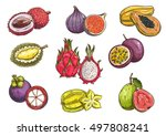 tropical and exotic fruits.... | Shutterstock .eps vector #497808241