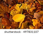 Fallen Autumn Leaves  Colorful...