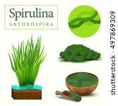 set of spirulina algae  tablets ...   Shutterstock .eps vector #497869309