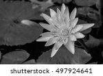 Lotus   Lotus Pictures...