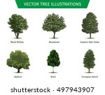 different tree sorts with names.... | Shutterstock .eps vector #497943907