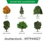 different tree sorts with names.... | Shutterstock .eps vector #497944027
