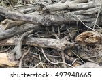 Small photo of driftwood accumulation on foreground
