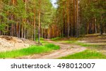 nature pine forest with sandy... | Shutterstock . vector #498012007