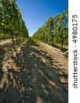 vineyard in langhe roero  italy ... | Shutterstock . vector #4980175