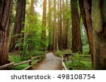 Hiking Trails Through Giant...