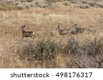 Three Deer Walking Near...