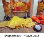 autumn objects abstract... | Shutterstock . vector #498262015