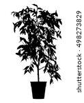 tree  flower benjamin   ficus... | Shutterstock .eps vector #498273829
