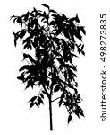 tree  flower benjamin   ficus... | Shutterstock .eps vector #498273835