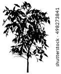 tree  flower benjamin   ficus... | Shutterstock .eps vector #498273841