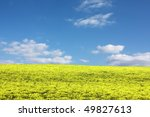 Meadow with yellow flowers and blue sky - stock photo