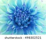 turquoise dahlia  flower. ... | Shutterstock . vector #498302521