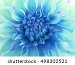 Turquoise Dahlia  Flower. ...